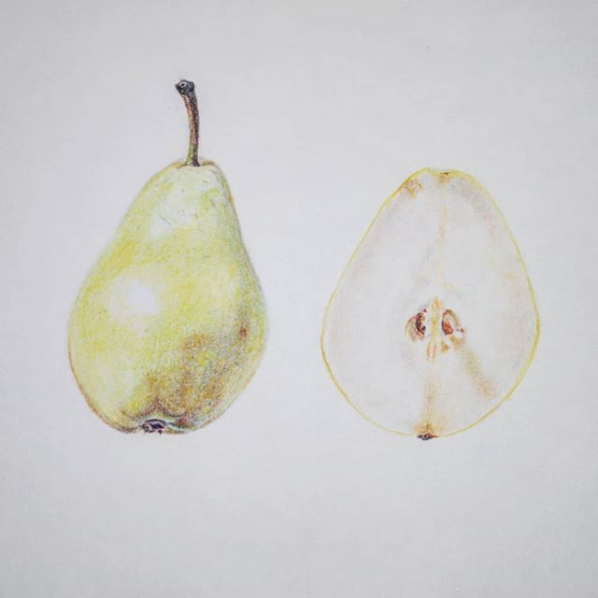 "Screenshot_2019-02-25 Blair O on Instagram ""Yet another #fruit drawing 🍐😉 Chalk pastel on paper✏ #pear"""
